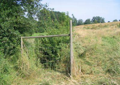 Grüne Wiese mit Büschen und Zaun