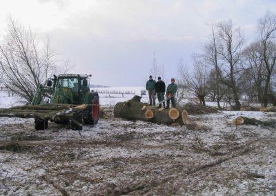 Fällung eines Baumes im Winter
